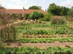 large Vegetable Garden for food during disaster, emergency grid-down
