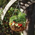 Vegetable Garden - plant in hanging baskets