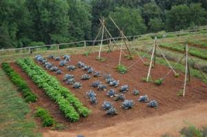how big a Vegetable Garden to plant
