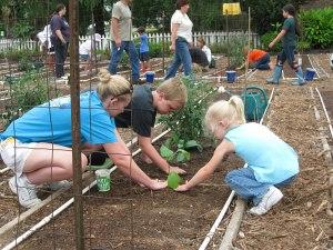 Vegetable Garden Family perpper family working in garden