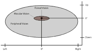 Foveal vision
