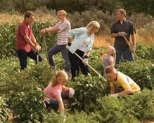 healthy people working in the garden