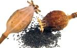 Opium Poppy Seeds