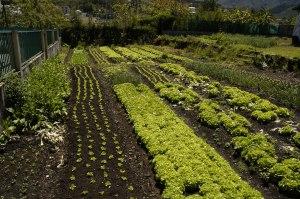 Garden for teotwawki