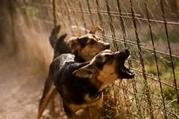 Barking Dogs in fenced yard is good security